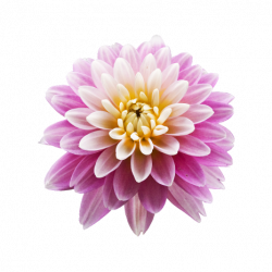 More than 100 dahlia varieties in the collection